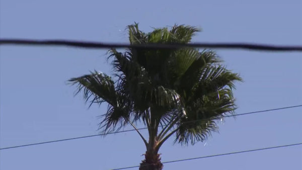 Strong Santa Ana Winds Returning to SoCal Prompts Red-Flag Warning, Possible Power Shutoffs – NBC Los Angeles