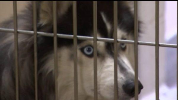 Animals Backlogged at Shelters Due to Veterinarian Shortage – NBC Los Angeles